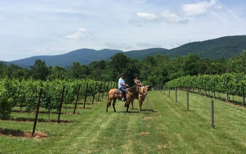 vineyard horseback trail rides 3 hours